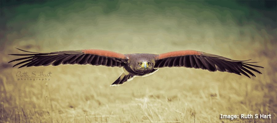 Birds of Prey & Action in Cressing Barns, Essex