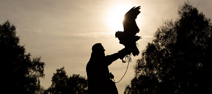 Birds of Prey & Action in East Midlands