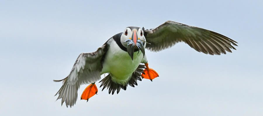 Wildlife & Nature Photo Walks in Farne Islands
