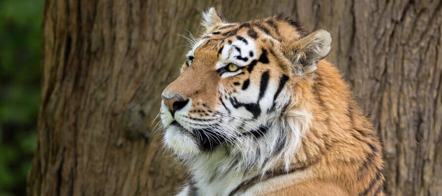 Wildlife Masterclasses in Hamerton Zoo Park, Cambridgeshire