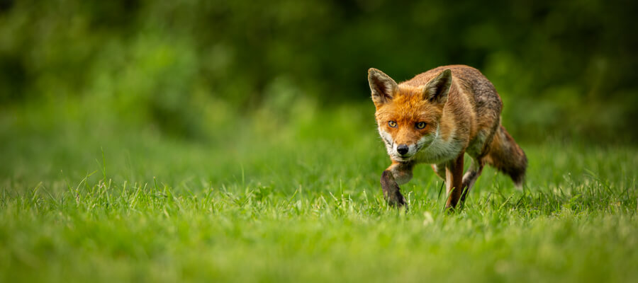 Wildlife Masterclasses in The Fox Hide