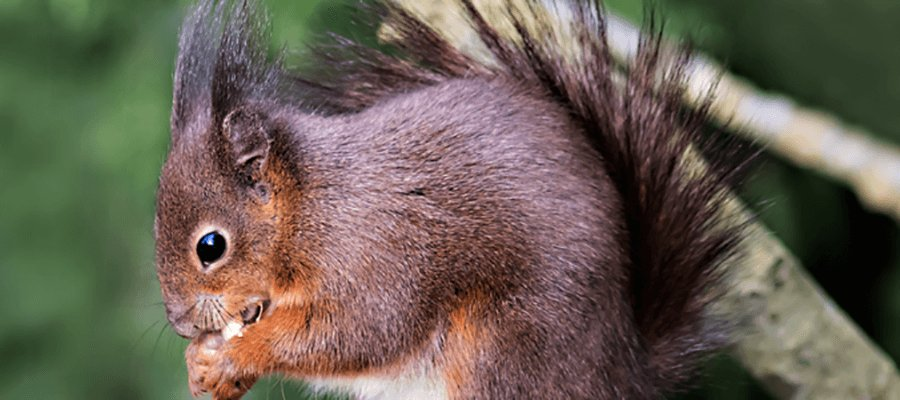Wildlife Photography in British Wildlife Centre, near East Grinstead, Surrey, RH7 6LF