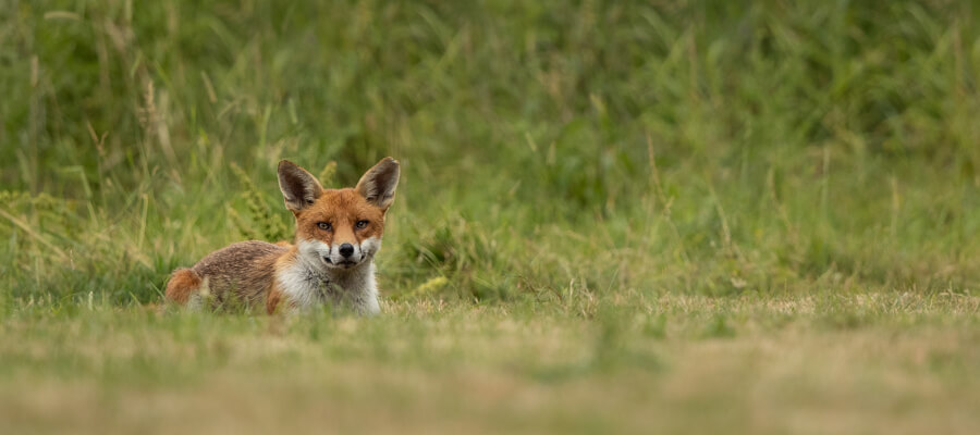 Wildlife Photography in The Fox Hide