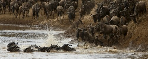 Kenya: The Great Migration