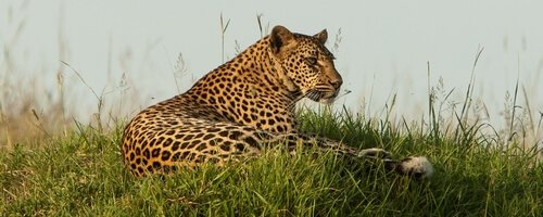 Kenya: Big Cats of the Masai Mara