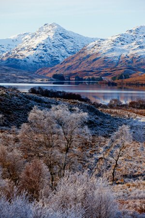 Trossachs frosty trees